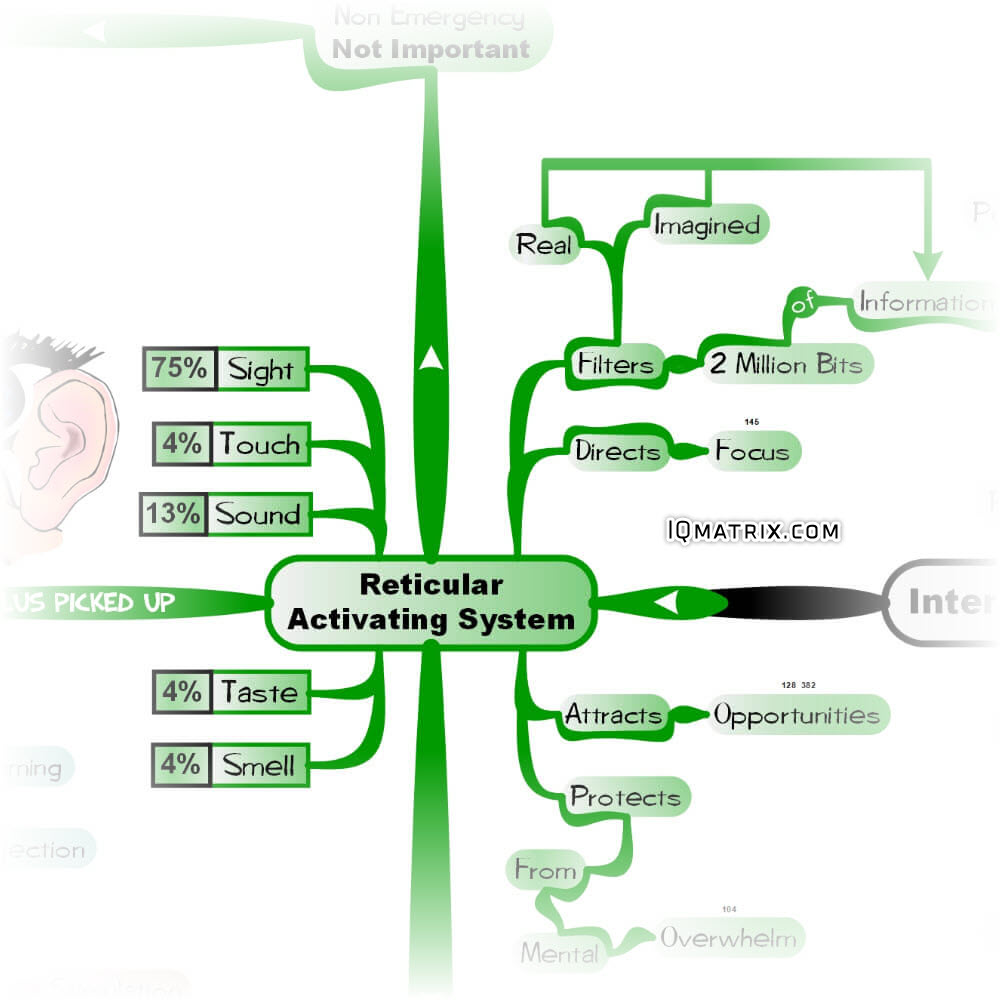 The Reticular Activating System